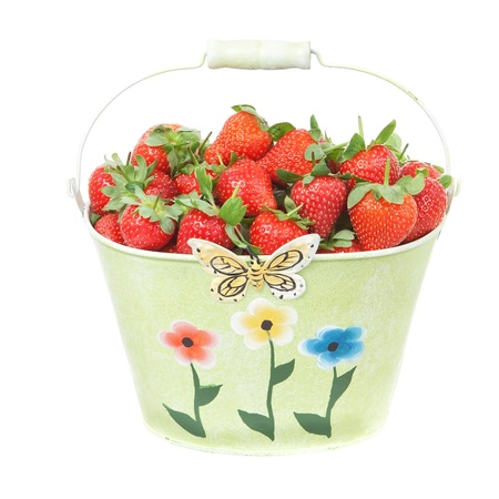 Red Strawberries in a tin bucket  Close-up  On a white background  photo