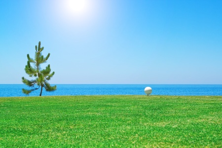 Golf ball near the tree on the background of the ocean  Portugal  photo