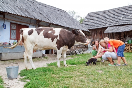 Family farm with calf and dog playing  Stock Photo