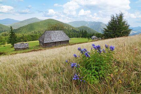 Blue flowers on a background of Carpathian landscape
