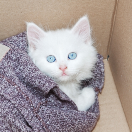 White kitten wrapped in a box  photo