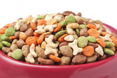 Dish cat dog food  Closeup Stock Photo - 16456513