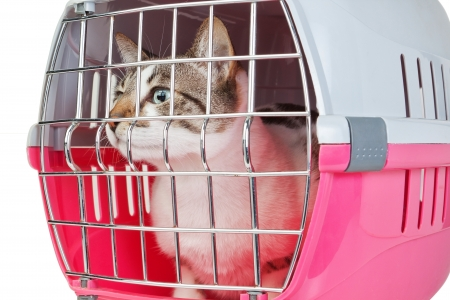 cat carrier: Pet cat trapped in a cage for a veterinarian.