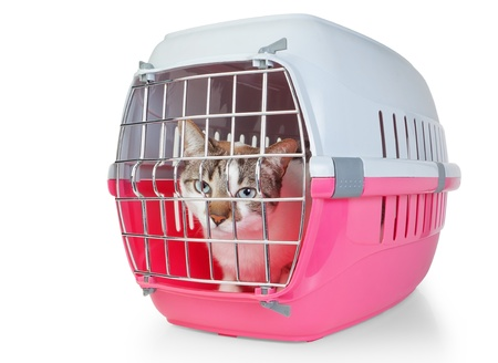 cat carrier: Box with a cat cage for transport  On a white background