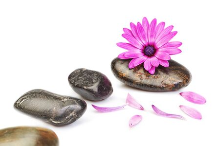 Stones for massage and flower osteospermum on a white background for a spa  photo