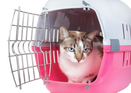 cat carrier: Cute cat sitting home watching from the cell. On a white background. Stock Photo