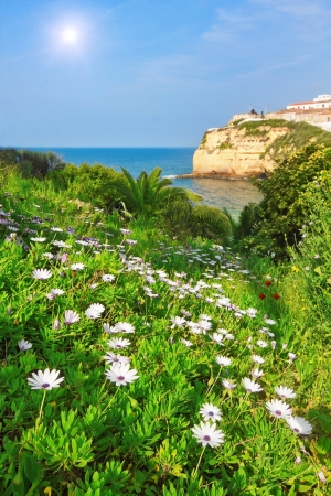 water feature: Flowers, daisies, grass in the garden against the beautiful beach of Carvoeiro in Portugal.
