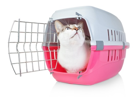 Pet cat in a cage for transport with door open. He looks up. Standard-Bild