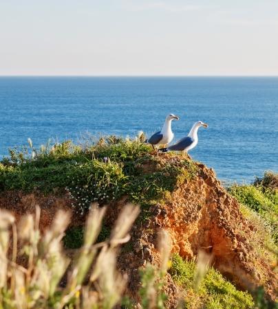 water s edge: Due gabbiani su una costa rocciosa in erba Sullo sfondo del mare blu Archivio Fotografico