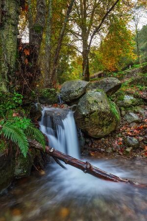 monchique: The creek flows into the autumn forest. Sun rays in the trees. Monchique Portugal.
