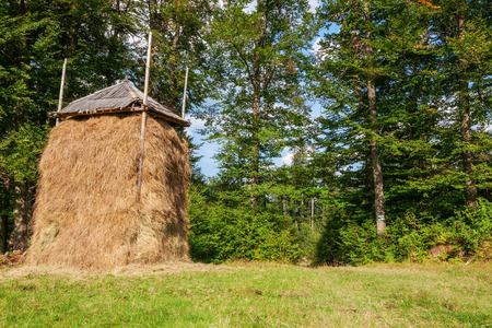 haystack: Haystack in the Carpathian forest. Stock Photo