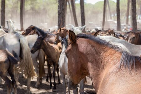 beast ranch: Horses on pasture after a walk. Spain.