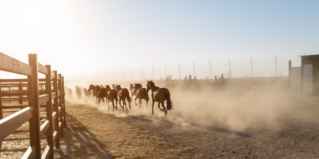 Horses running in the corral. Riders escorted into the sunset.