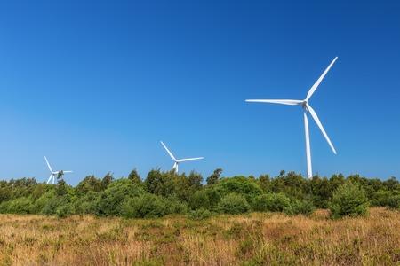 Wind generators line the forest. Portugal Sagres