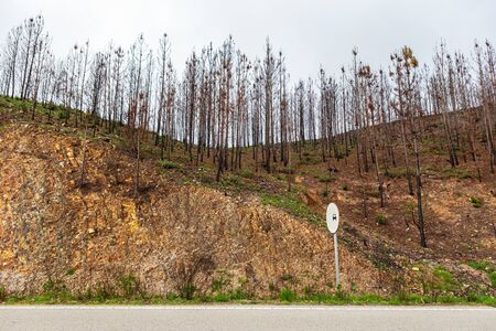 State of forests and valleys after the disaster and fires in Monchique. Portugal. Stock Photo - 126364414