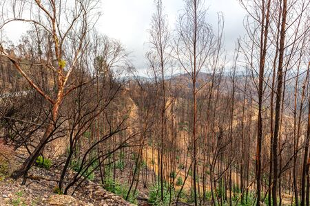 State of forests and valleys after the disaster and fires in Monchique. Portugal.