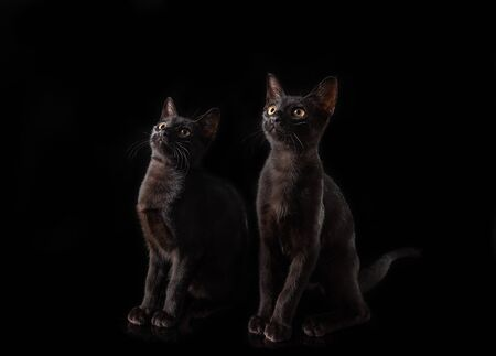 A pair of black cats on a black