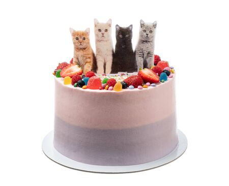 Cheerful birthday cake made of sweets and cats.