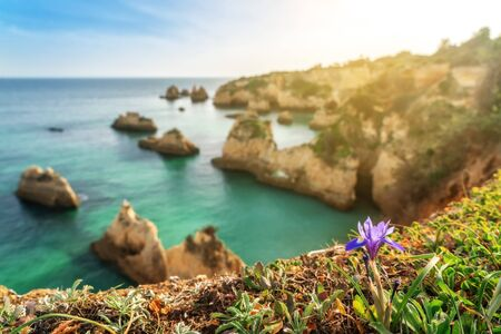 Beautiful bay landscape on the Portuguese beach of Boiao, green grass and purple flower. Algarve