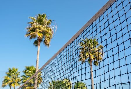 Conceptual sporty view tennis net on palm tree background.