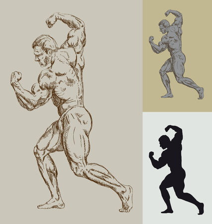musculo: culturista