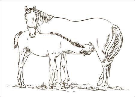 horses Иллюстрация