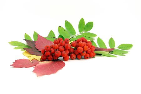 Red rowanberry and autumn leaves photo