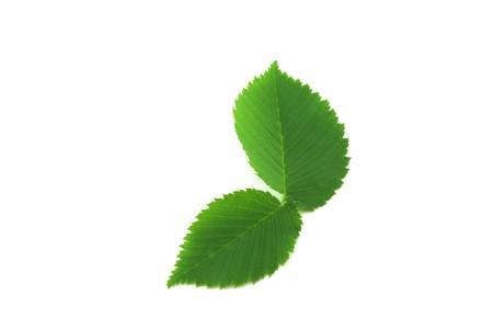 minutiae: Green leaves Stock Photo