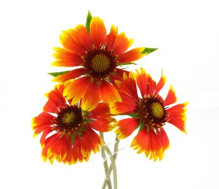 Drie dieprode bloemen