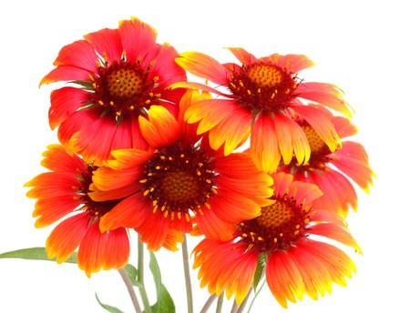 Scarlet flowers Stock Photo
