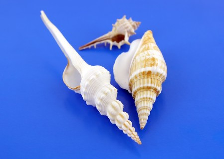 Sea shells on the blue background. Shallow DOF. photo