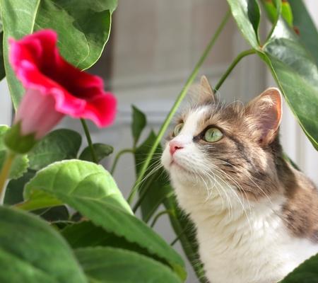 花の葉の近くの猫。浅い自由度。