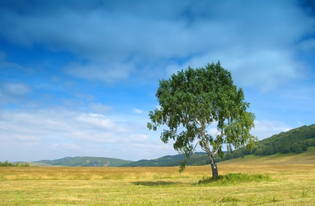 Summer landscape with birch photo