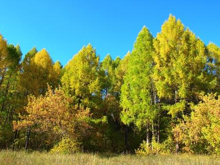 木と自然の秋 写真素材