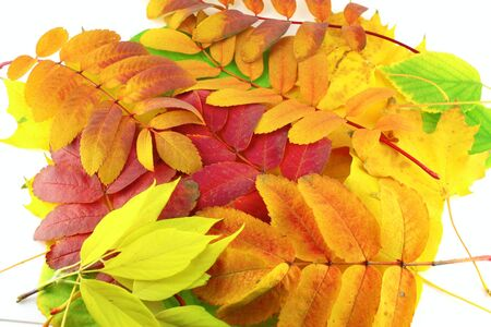 Abstract background with color autumn leaves photo