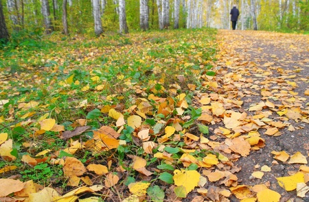 Walk in the autumn birch grove. Shallow DOF. Stock Photo - 10851134