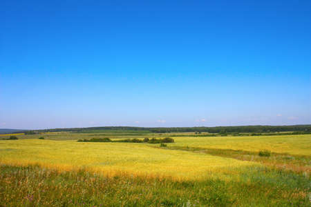 Beautiful village summer landscape with blue sky Stock Photo - 12758476