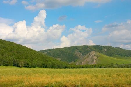 Mooie zomer landschap met bos op de bergen