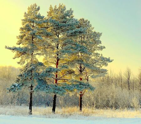 Beautiful landscape with winter forest photo