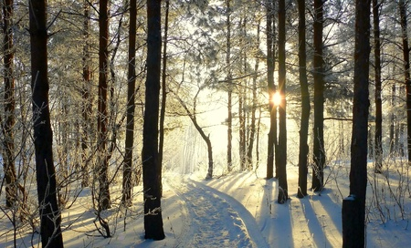 Beautiful evening landscape in winter forest photo