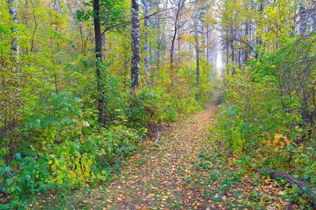 Footpath in autumn forest photo