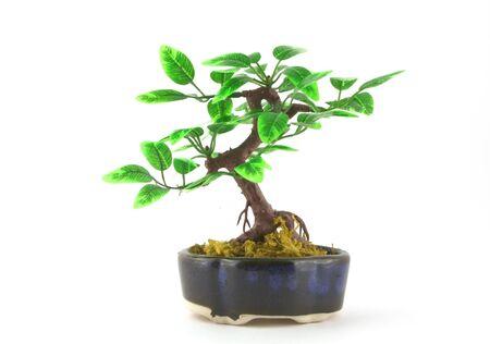 artifical: Artifical Bonsai tree over white. Shallow DOF