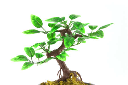 artifical: Artifical Bonsai tree over white