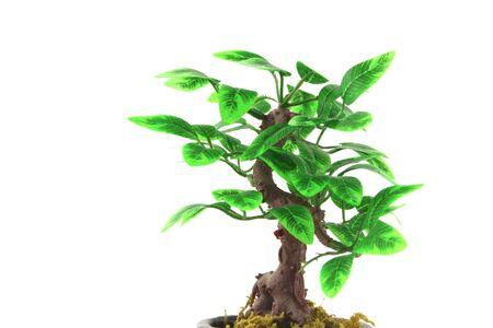 artifical: Artifical Bonsai tree over white