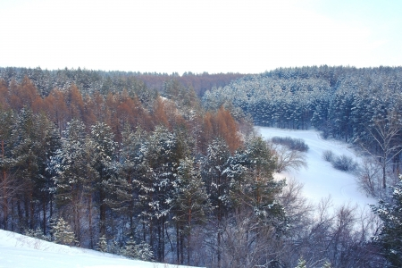 Winter landscape in forest with pines on the mountains Stock Photo - 18132066