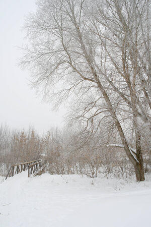 Winter foggy landscape with bridge and trees photo