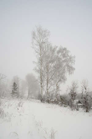 Winter foggy landscape with trees photo