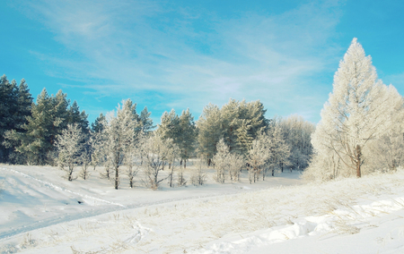 Beautiful winter landscape with trees hoarfrost covered photo