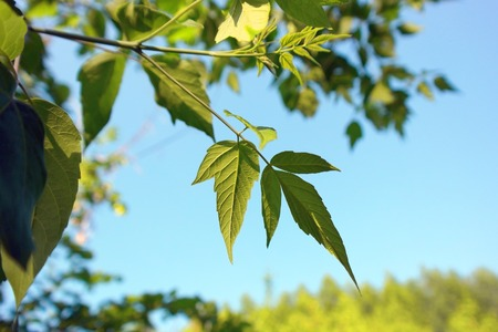 Green leaves over blue sky, shallow DOF. Stock Photo