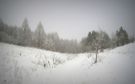 Winter foggy landscape in forest. Stock Photo